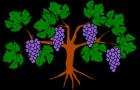 October 2019 Grapevine