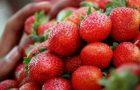 Patronal Festival – St Matthew's Day Service and Strawberry Sunday