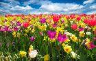 Spring Soiree